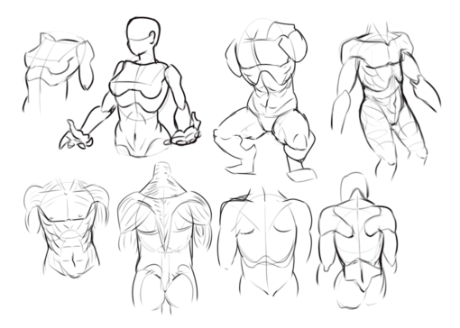 Torsos Drawing Drill Challenge by Smirking Raven