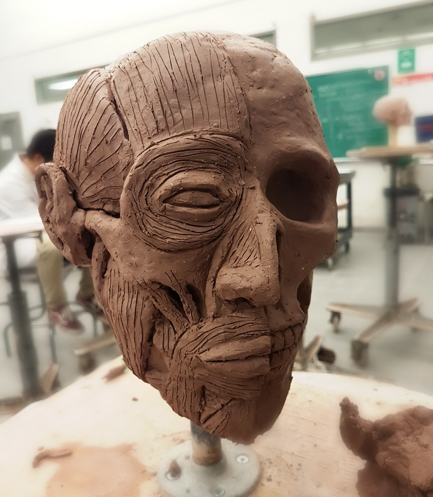 Skull and muscles studies clay by Smirking Raven