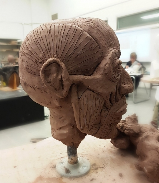 Skull and muscles studies sculpture profile clay by Smirking Raven