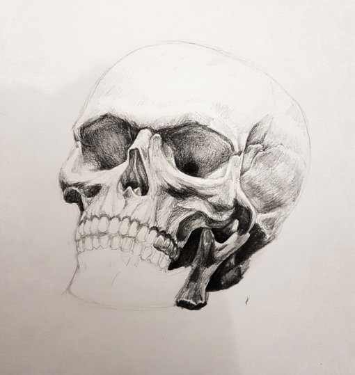 Skull studies, clay & pencil by Smirking Raven