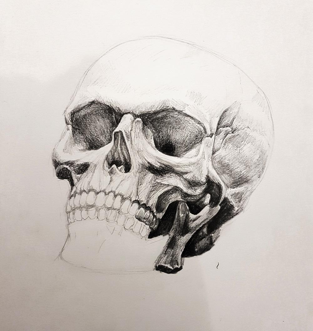 Skull studies pencil drawing by Smirking Raven