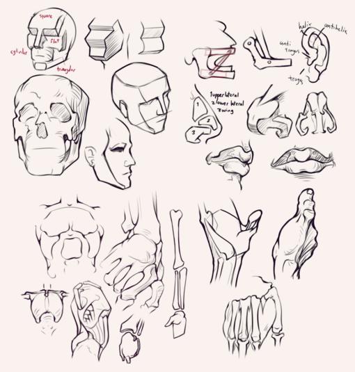 Compilation 27 Bridgman studies Drawing Drill Challenge by Smirking Raven