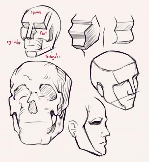 Head - Bridgman studies - Drawing drill by Smirking Raven