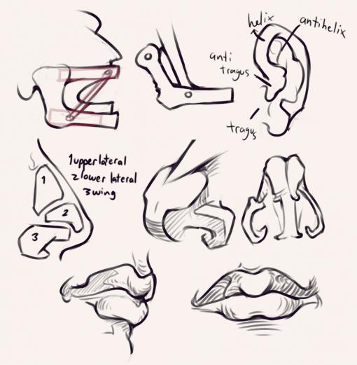 Face - Bridgman studies - Drawing drill by Smirking Raven