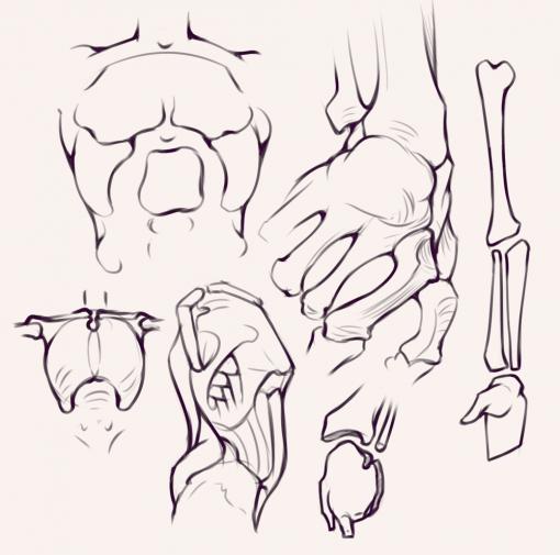 Torso - Bridgman studies - Drawing drill by Smirking Raven