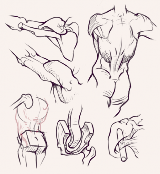 Body - Bridgman studies - Drawing drill by Smirking Raven