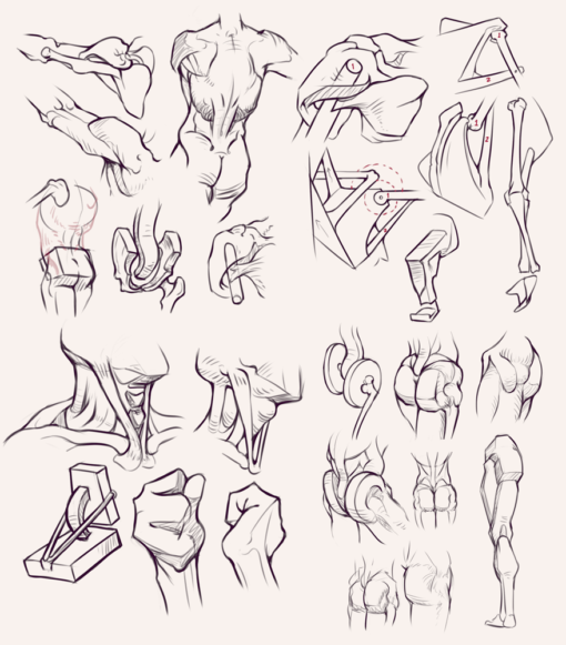 Compilation 28 Bridgman studies Drawing Drill Challenge by Smirking Raven