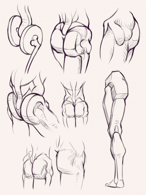 Hips - Bridgman studies - Drawing drill by Smirking Raven