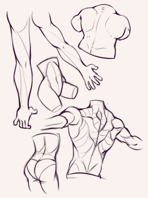 Back muscle studies - Drawing Drills by Smirking Raven